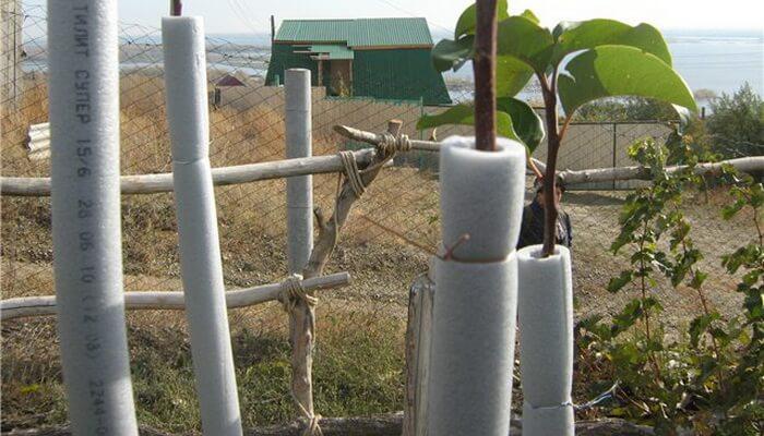 Чем обвязать деревья на зиму