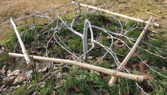 материалы, утеплитель, при скольки мороза закрывать виноград выборе