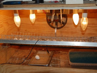 Инкубатор для яиц. сделать своими руками