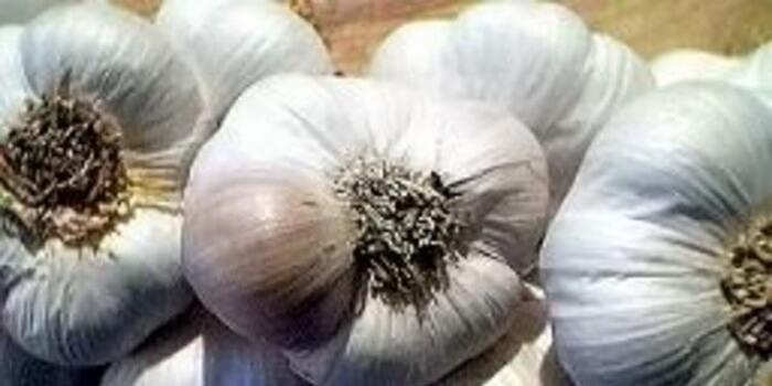 сорта озимого чеснока с фото