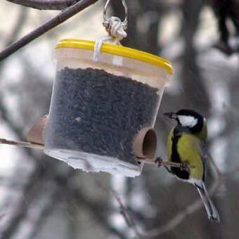 Как уберечь от птиц подсолнух