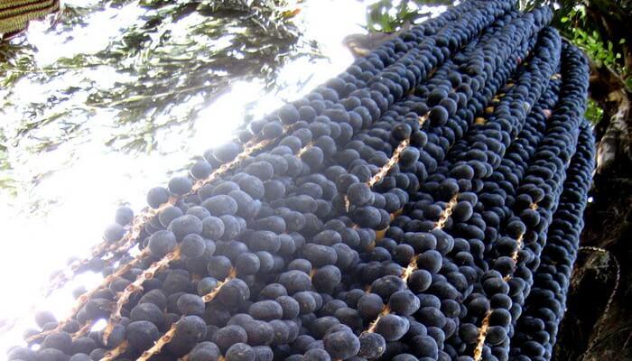 Экстракт стволовых клеток ягод асаи - мощный антиоксидант
