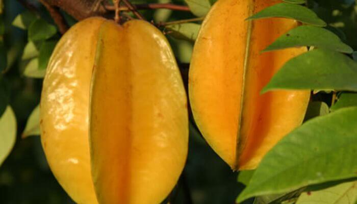 Карамбола фрукт фото