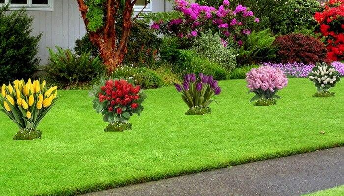 Использование луковичных растений в озеленении