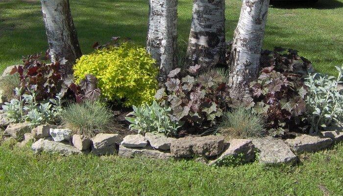 Какие растения можно посадить на участке