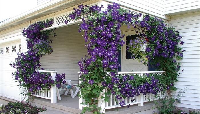 чем цветущие растения.