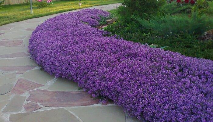 Фото красиво посаженных цветов 13