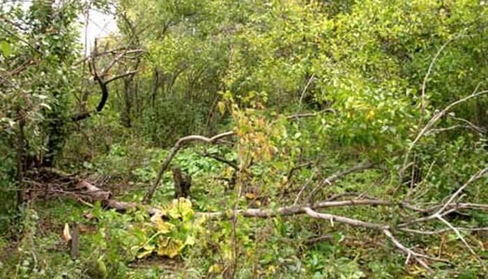 Посадка вишни расстояние между саженцами