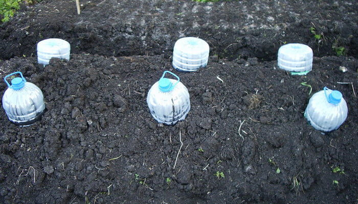 Уход и агротехника кабачка в открытом