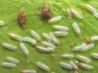 Как бороться с щитовкой на комнатных растениях? Применение инсектицидов 14