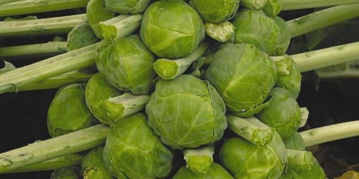 Фото брюссельской капусты