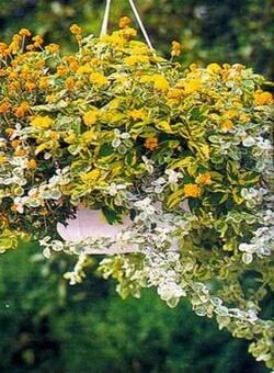 Своими руками для цветов сада