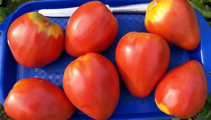 ... до 80см дает сладкие овощи весом до 1300г: www.udec.ru/tomat/new-sorta-tomatov.php