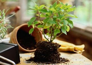 Торфяные почвы - болотный грунт, окультивирование песчаных и болотных почв, навоз и птичий помет как удобрение для растений - Садовый участок