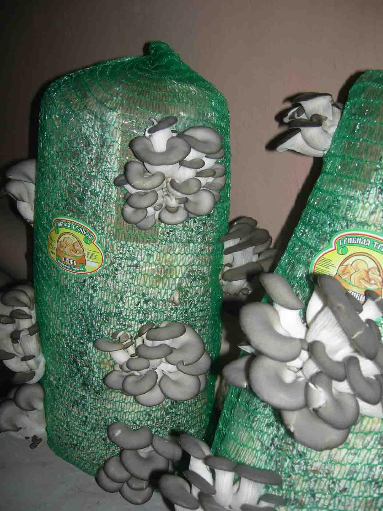 Выращивание грибов в подвале: основные правила 63