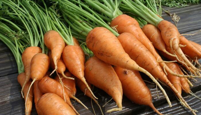 морковь сорт королева осени фото описание