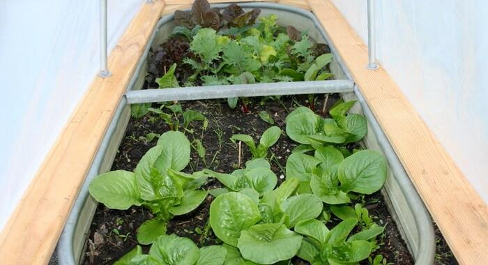 Выращивание петрушки в домашних условиях 91
