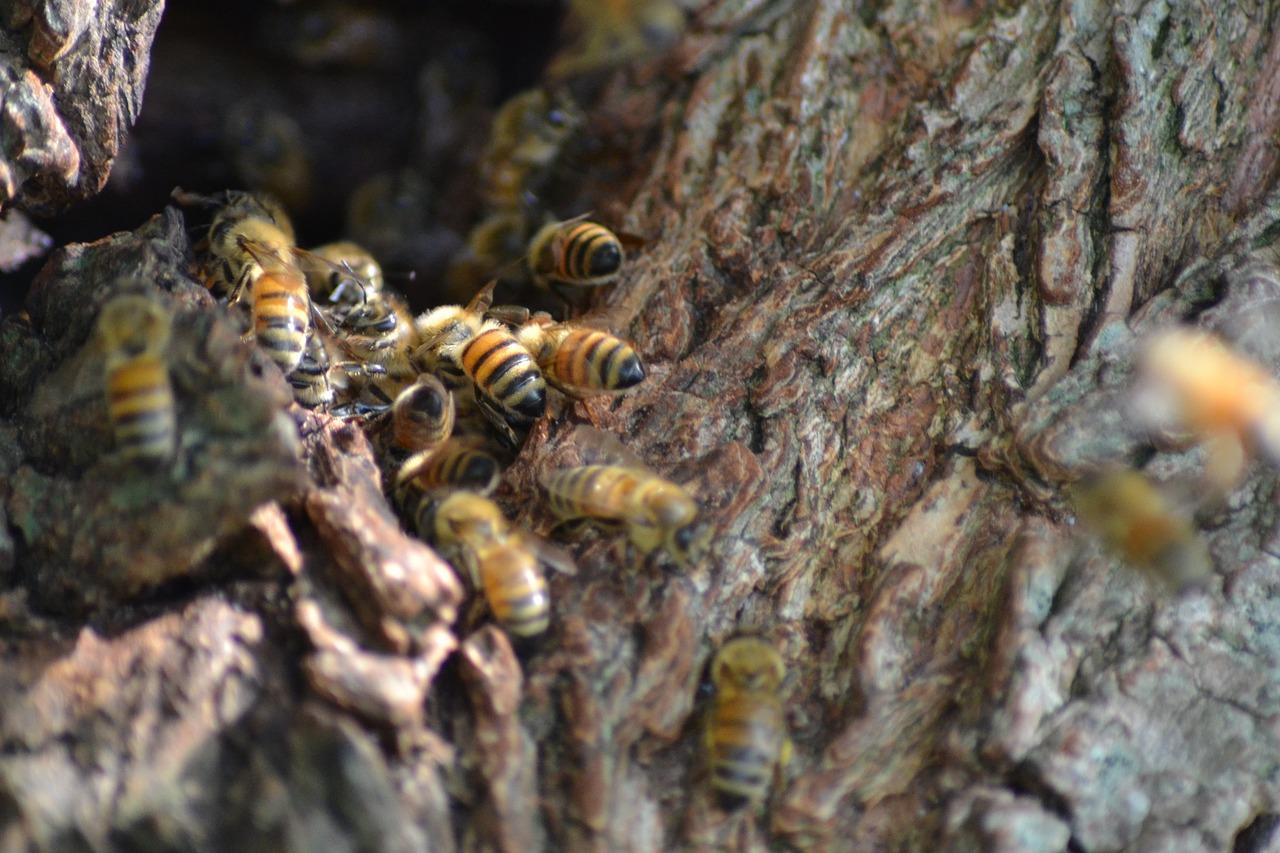 Насколько агрессивны пчелы